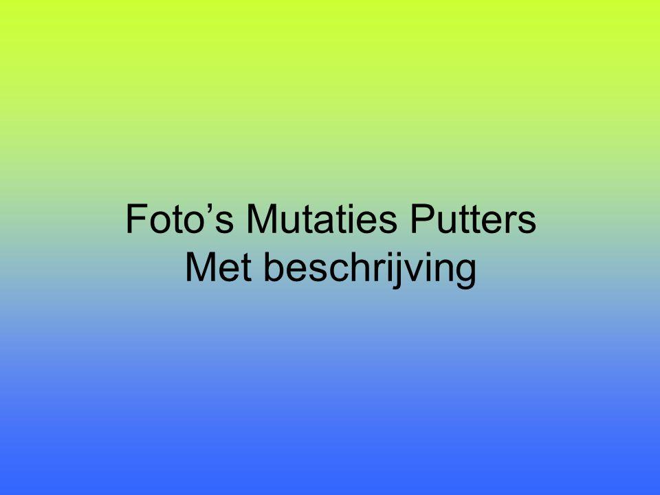 Foto's Mutaties Putters Met beschrijving