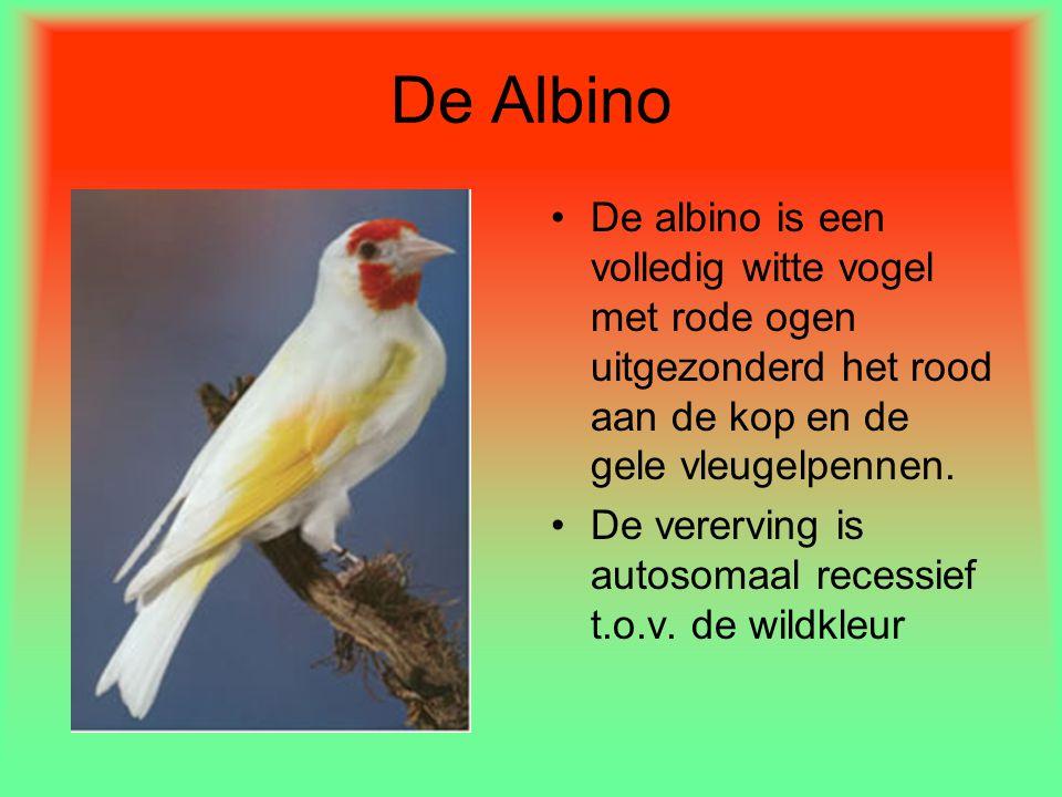 De Albino De albino is een volledig witte vogel met rode ogen uitgezonderd het rood aan de kop en de gele vleugelpennen.
