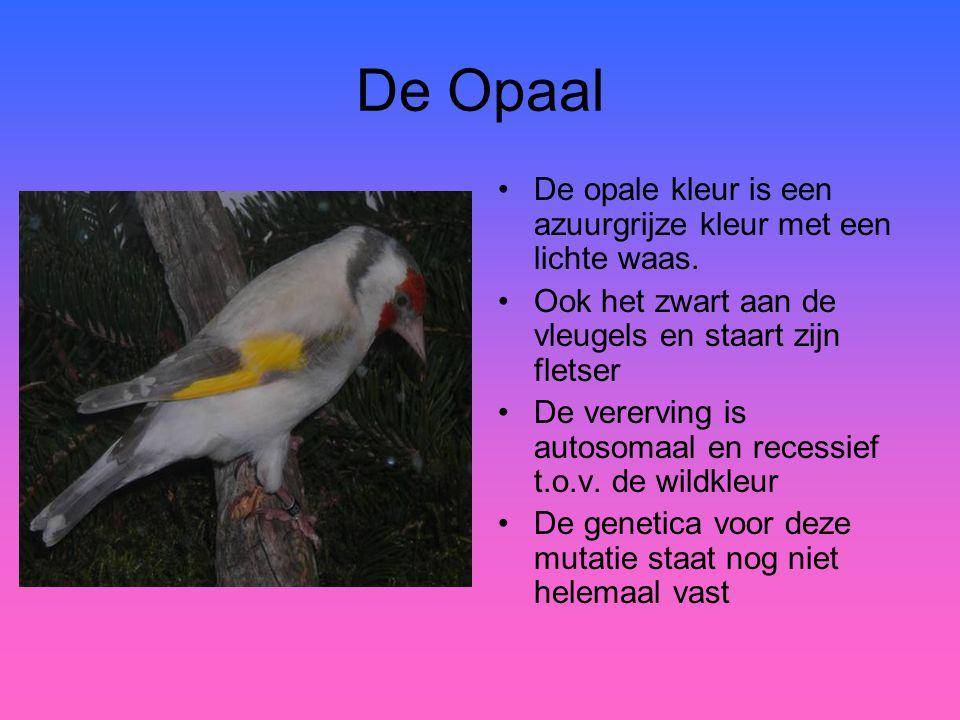 De Opaal De opale kleur is een azuurgrijze kleur met een lichte waas.