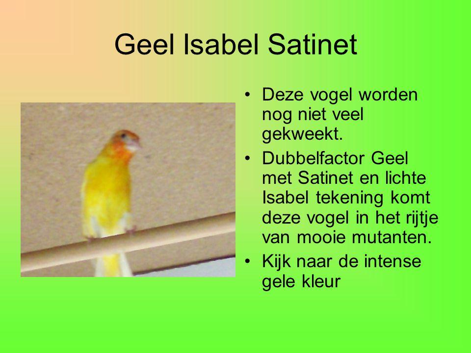 Geel Isabel Satinet Deze vogel worden nog niet veel gekweekt.
