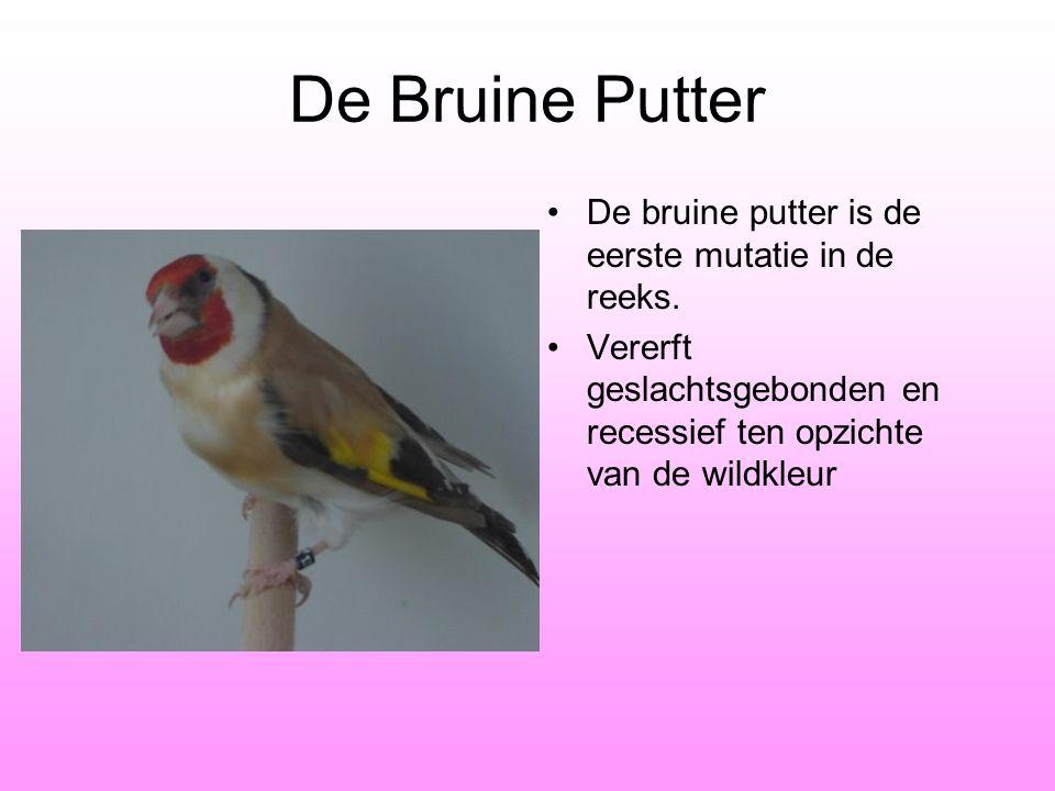 De Bruine Putter De bruine putter is de eerste mutatie in de reeks.