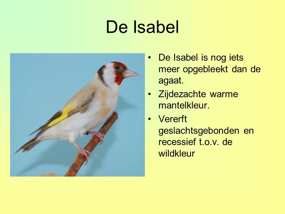 De Isabel De Isabel is nog iets meer opgebleekt dan de agaat.