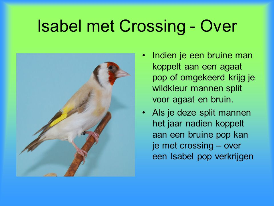 Isabel met Crossing - Over