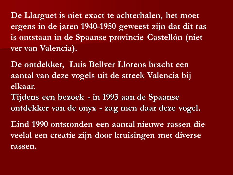 De Llarguet is niet exact te achterhalen, het moet ergens in de jaren 1940-1950 geweest zijn dat dit ras is ontstaan in de Spaanse provincie Castellón (niet ver van Valencia).