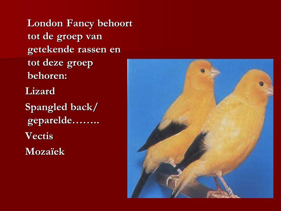 London Fancy behoort tot de groep van getekende rassen en tot deze groep behoren: