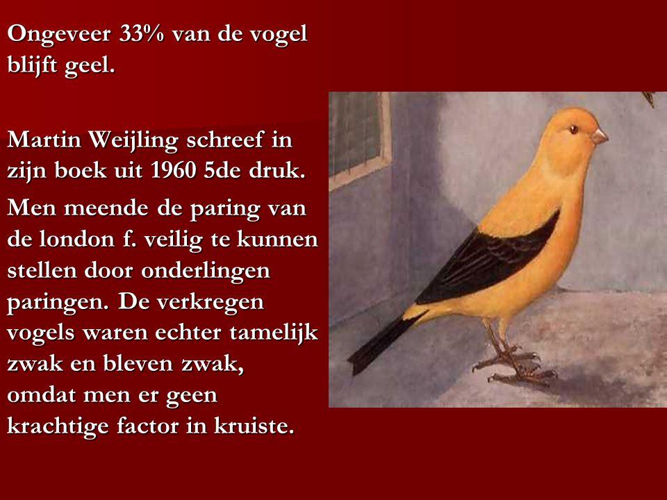 Ongeveer 33% van de vogel blijft geel.