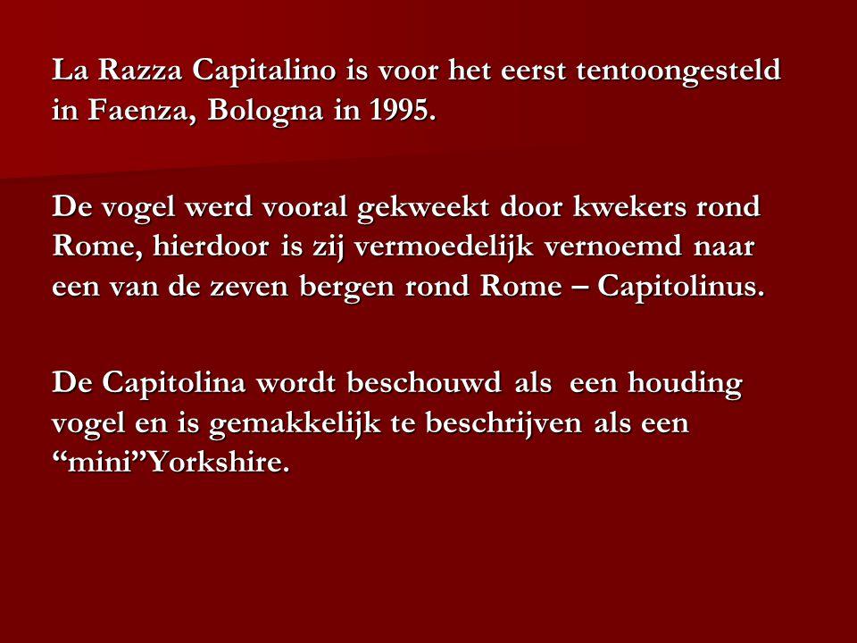 La Razza Capitalino is voor het eerst tentoongesteld in Faenza, Bologna in 1995.