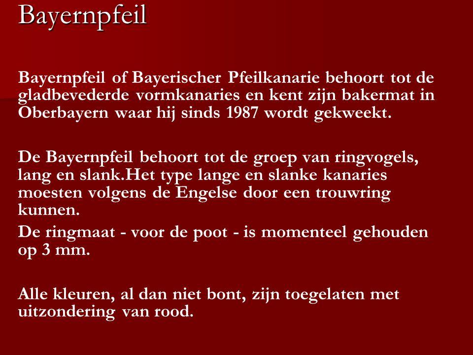 Bayernpfeil
