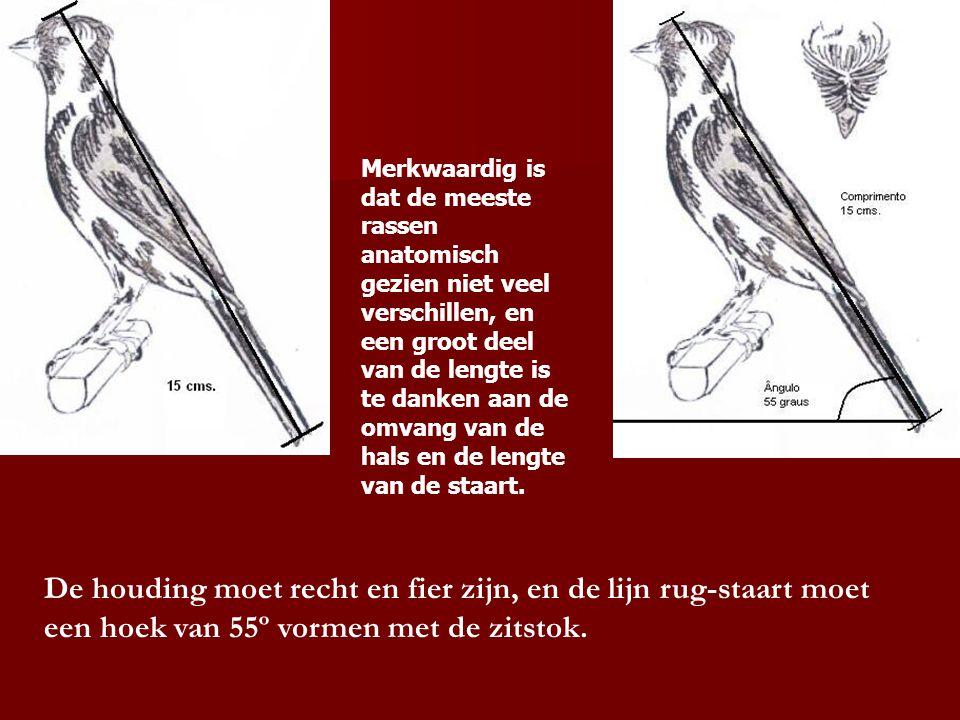 Merkwaardig is dat de meeste rassen anatomisch gezien niet veel verschillen, en een groot deel van de lengte is te danken aan de omvang van de hals en de lengte van de staart.