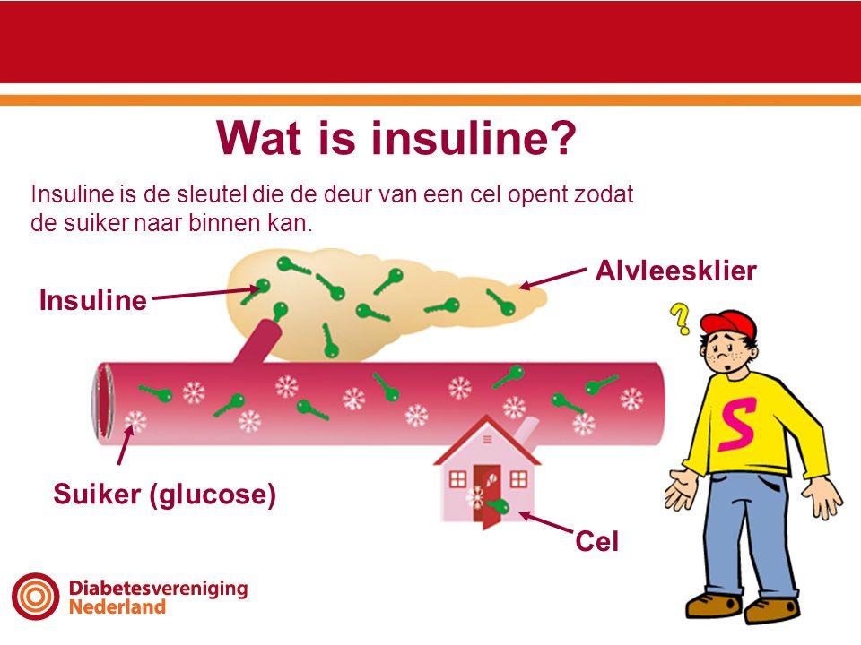 Wat is insuline Alvleesklier Insuline Suiker (glucose) Cel
