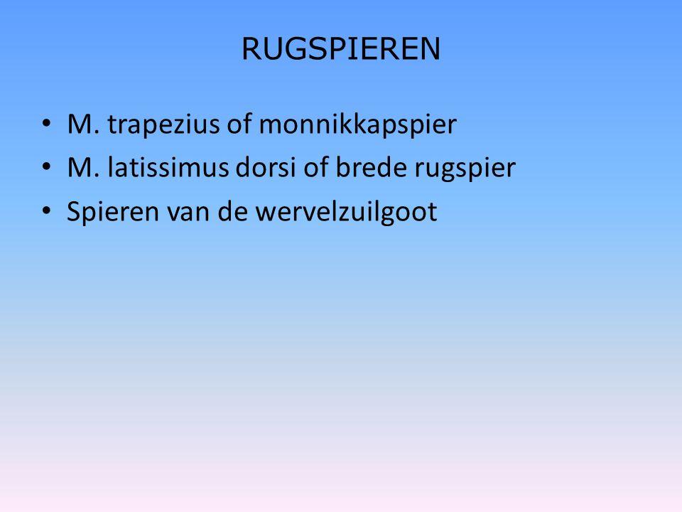 RUGSPIEREN M. trapezius of monnikkapspier. M. latissimus dorsi of brede rugspier.
