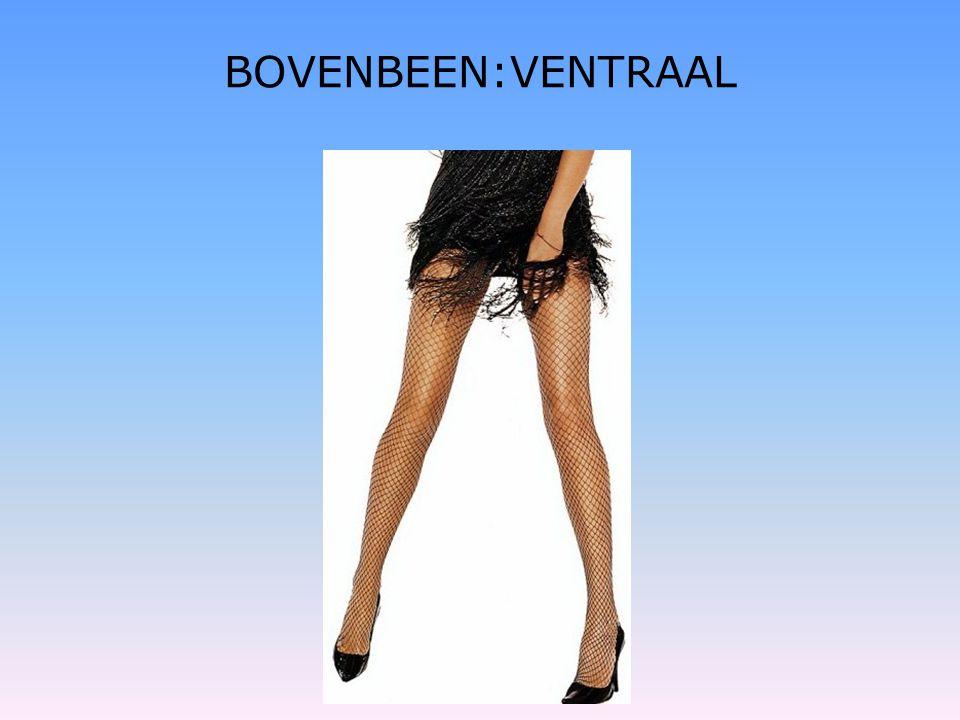 BOVENBEEN:VENTRAAL