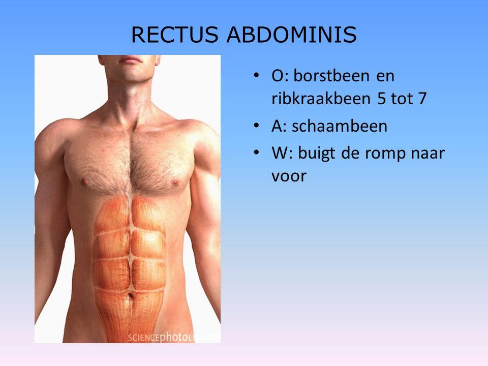 RECTUS ABDOMINIS O: borstbeen en ribkraakbeen 5 tot 7 A: schaambeen