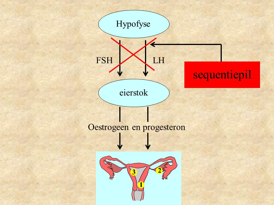 Hypofyse FSH LH sequentiepil eierstok Oestrogeen en progesteron
