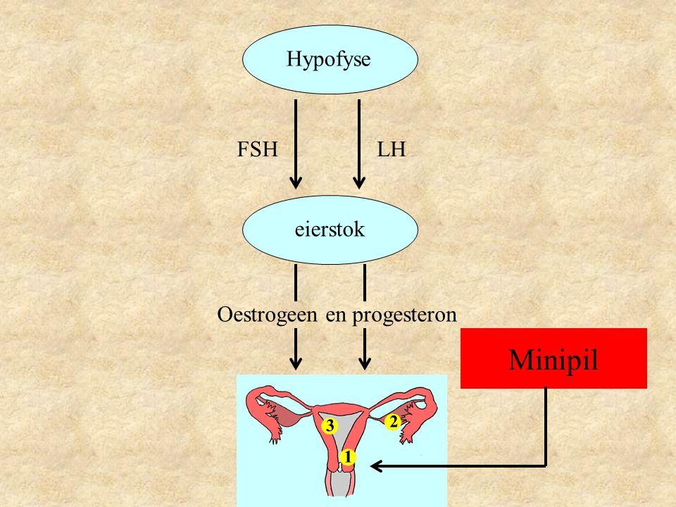 Hypofyse FSH LH eierstok Oestrogeen en progesteron Minipil