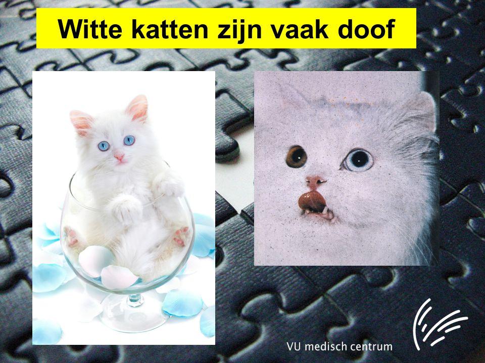 Witte katten zijn vaak doof