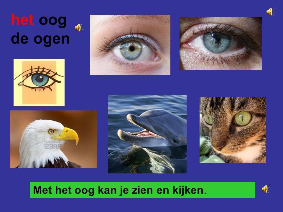 het oog de ogen Met het oog kan je zien en kijken.