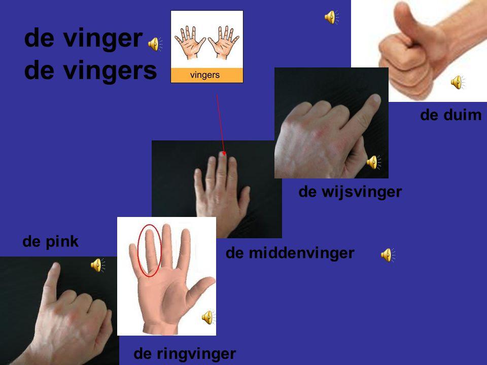 de vinger de vingers de duim de wijsvinger de pink de middenvinger