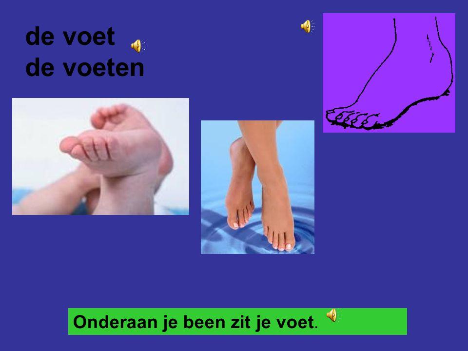 de voet de voeten Onderaan je been zit je voet.