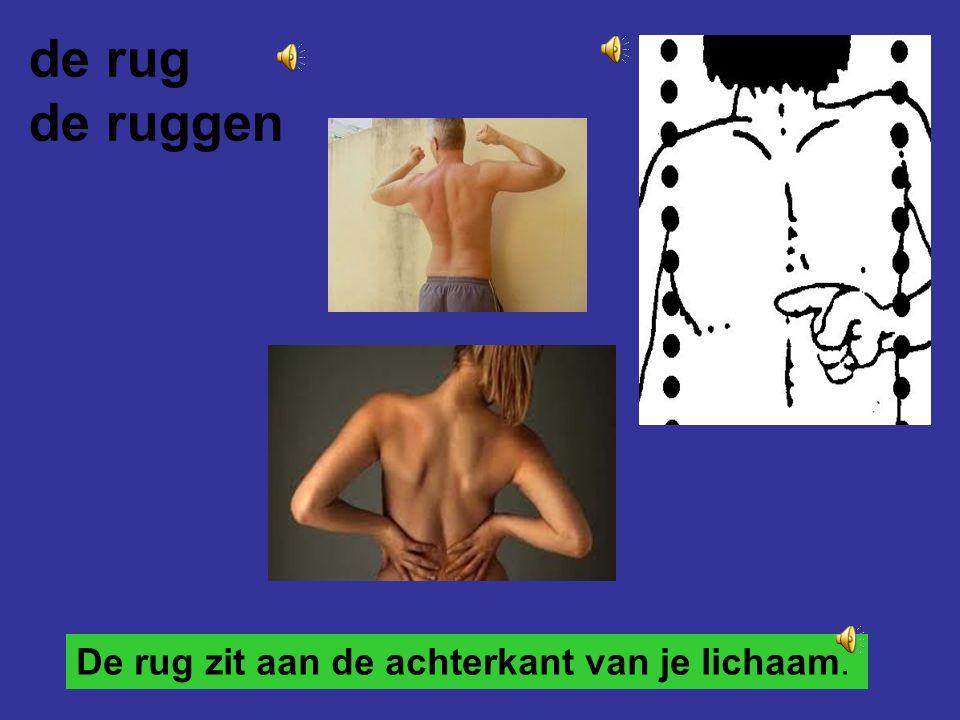 de rug de ruggen De rug zit aan de achterkant van je lichaam.