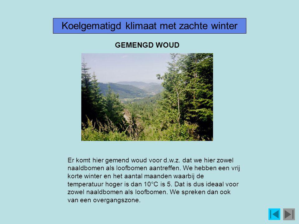Koelgematigd klimaat met zachte winter
