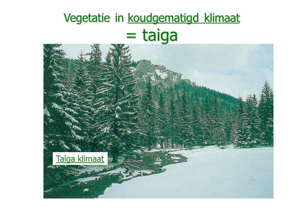 Vegetatie in koudgematigd klimaat = taiga