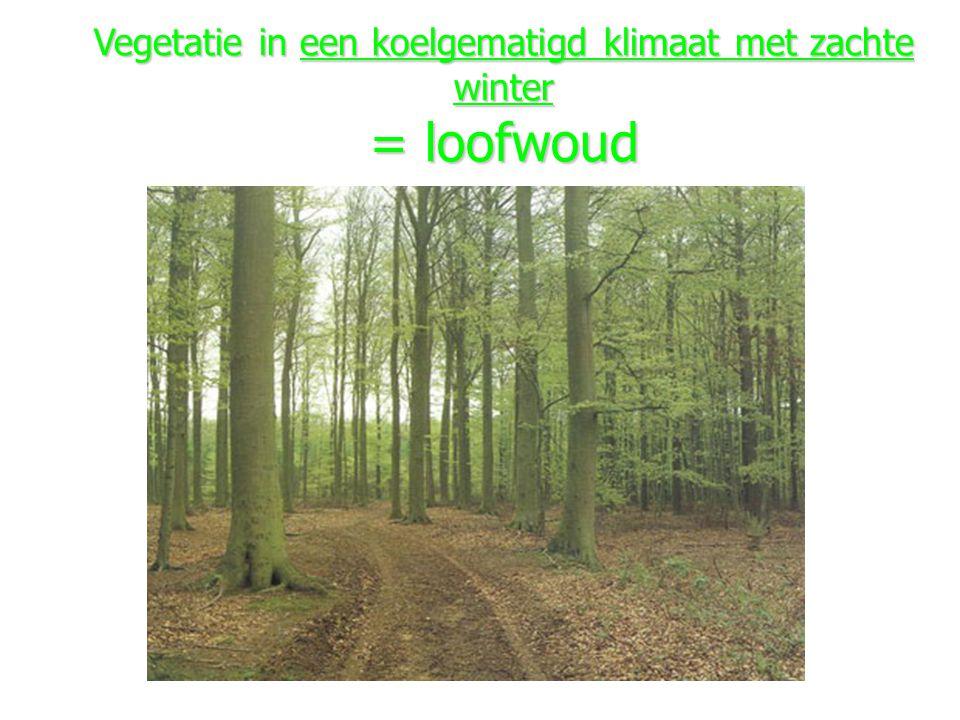 Vegetatie in een koelgematigd klimaat met zachte winter = loofwoud