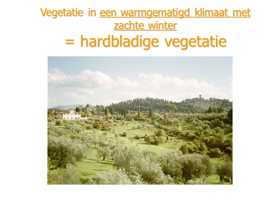 Vegetatie in een warmgematigd klimaat met zachte winter = hardbladige vegetatie