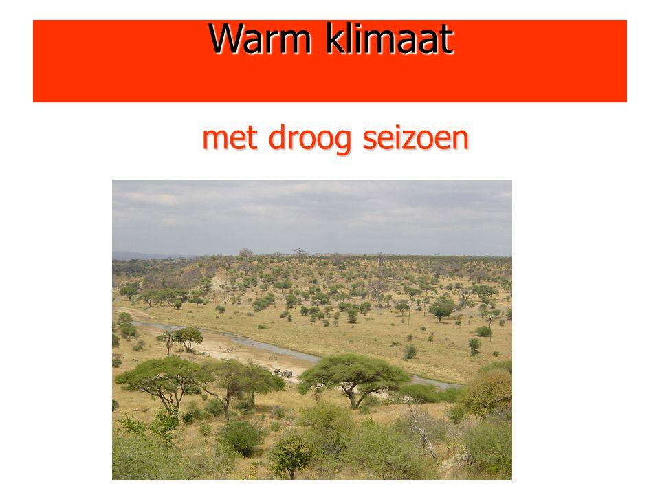 Warm klimaat met droog seizoen