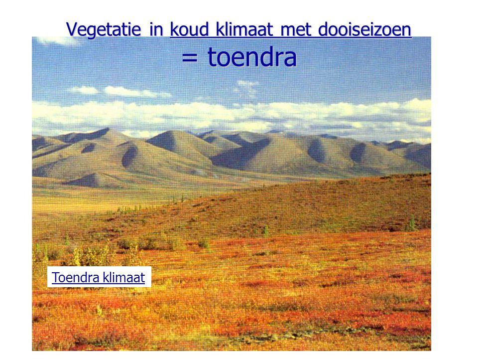 Vegetatie in koud klimaat met dooiseizoen = toendra