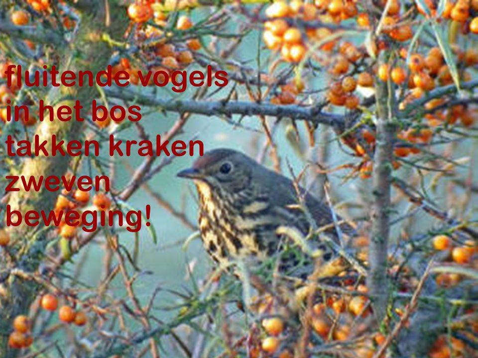 fluitende vogels in het bos takken kraken zweven beweging! Thomas