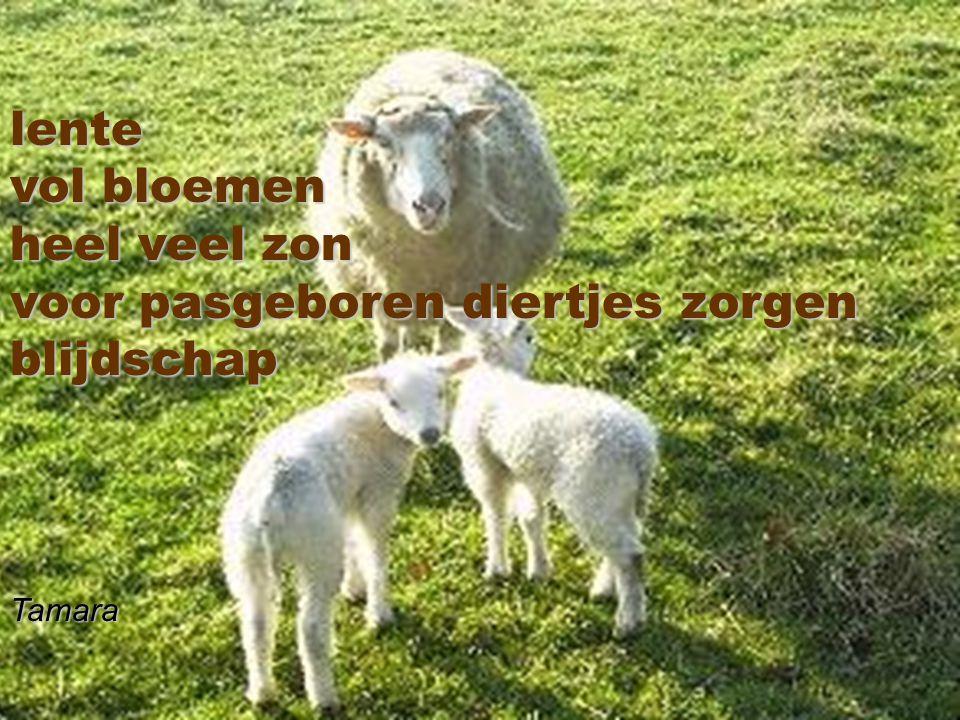 voor pasgeboren diertjes zorgen blijdschap