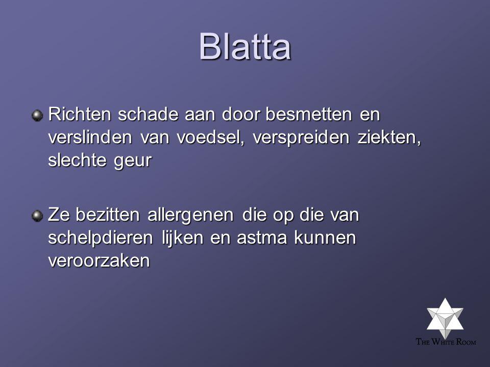 Blatta Richten schade aan door besmetten en verslinden van voedsel, verspreiden ziekten, slechte geur.