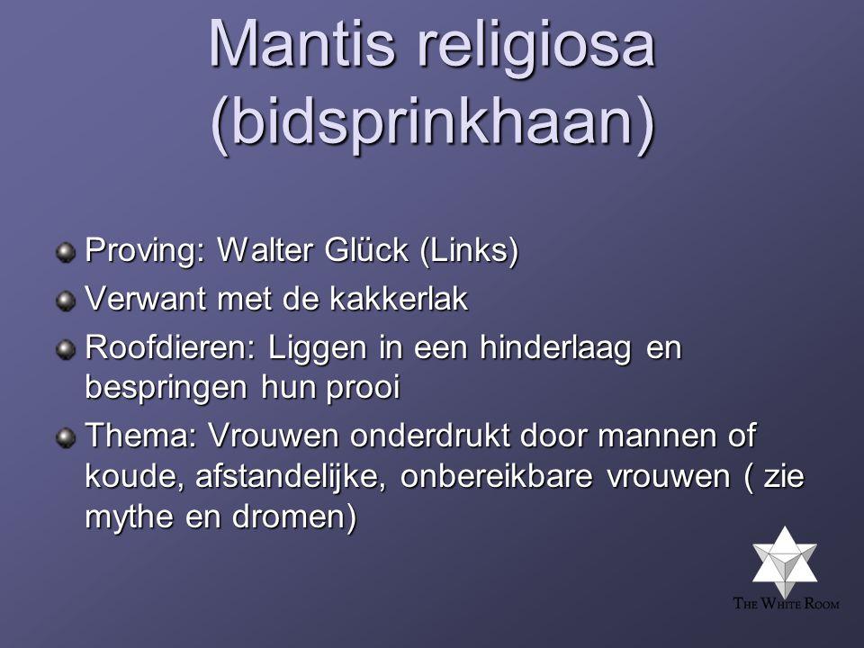 Mantis religiosa (bidsprinkhaan)