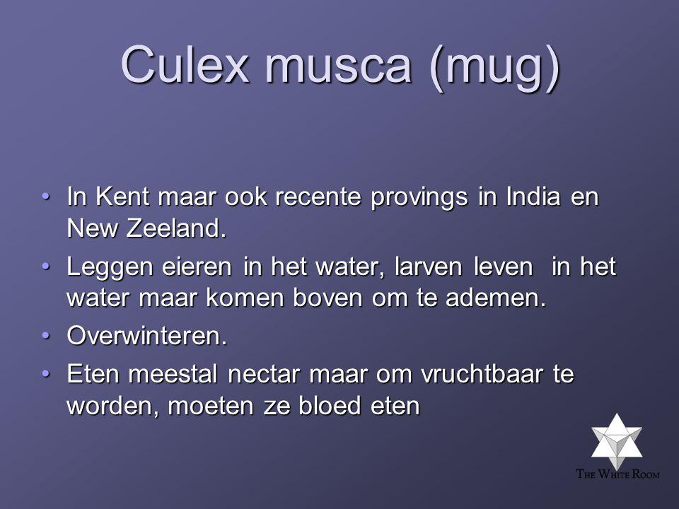 Culex musca (mug) In Kent maar ook recente provings in India en New Zeeland.