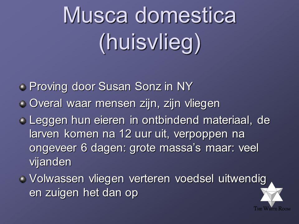 Musca domestica (huisvlieg)
