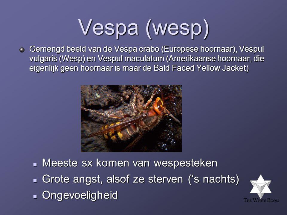 Vespa (wesp) Meeste sx komen van wespesteken
