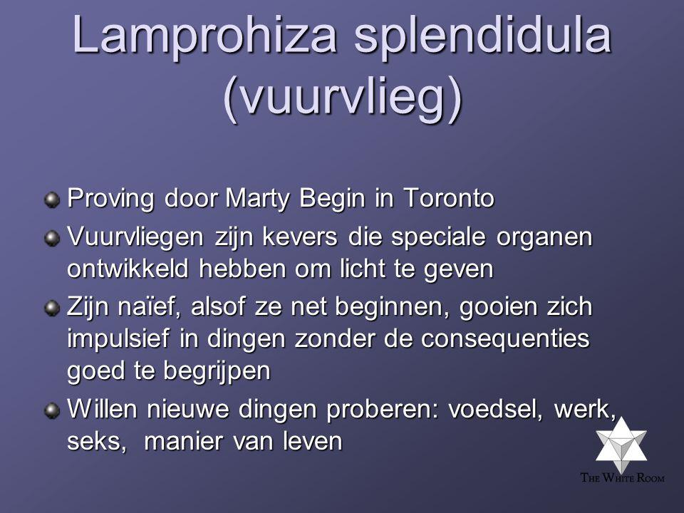 Lamprohiza splendidula (vuurvlieg)
