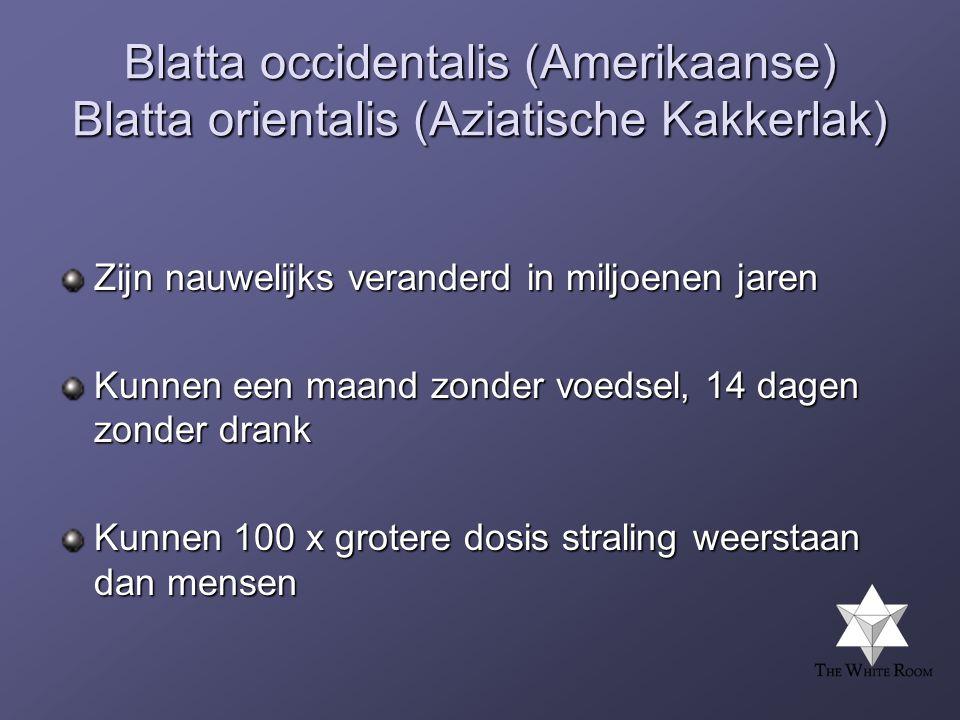 Blatta occidentalis (Amerikaanse) Blatta orientalis (Aziatische Kakkerlak)