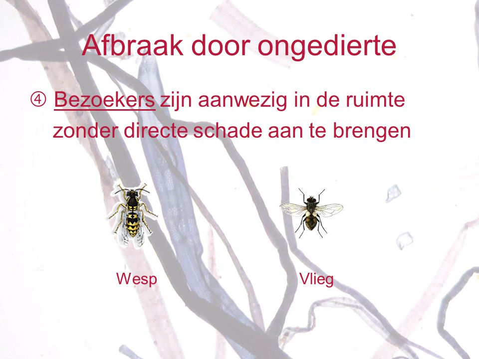 Afbraak door ongedierte