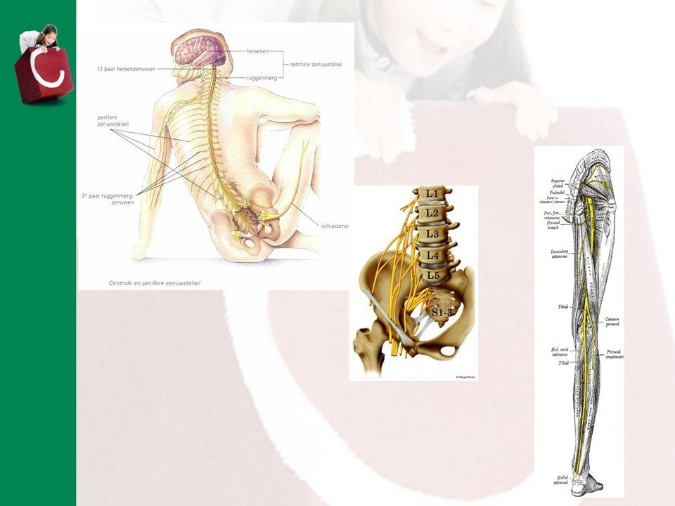 Even snel herhalen waarom er bij SB spieren zwak zijn: