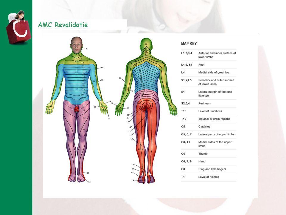 Zenuwen uit de rugenmerg gaan naar verschillende spieren en huid delen