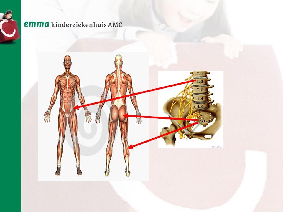 Naast de kuit zijn er nog 2 andere spieren die kracht leveren voor het lopen.