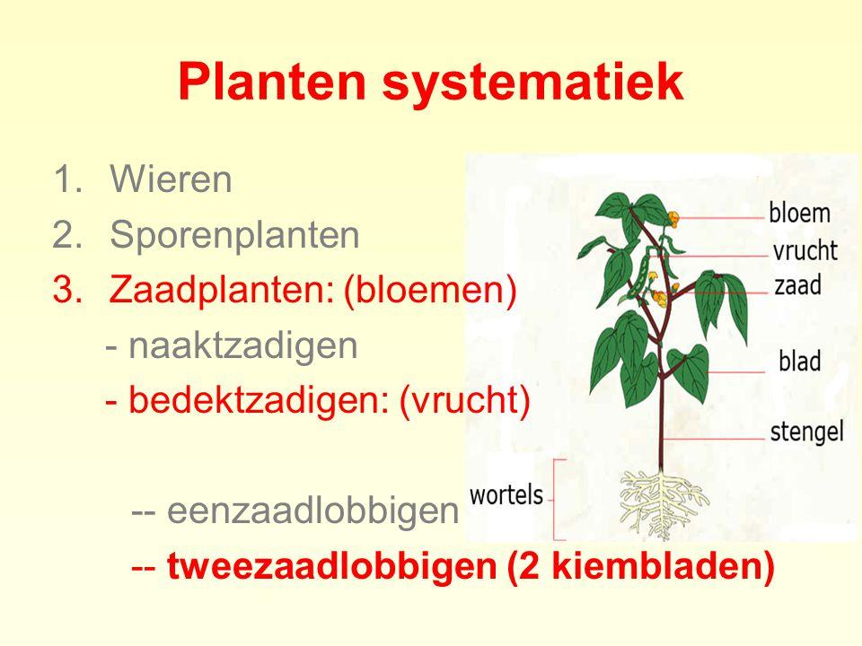 Planten systematiek Wieren Sporenplanten Zaadplanten: (bloemen)
