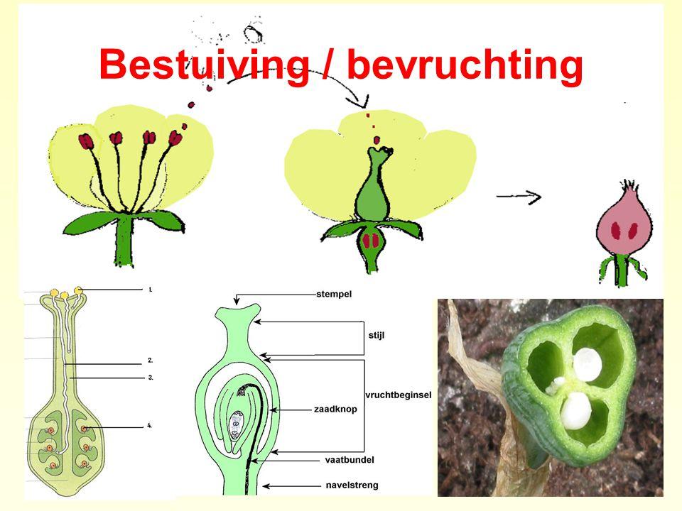 Bestuiving / bevruchting