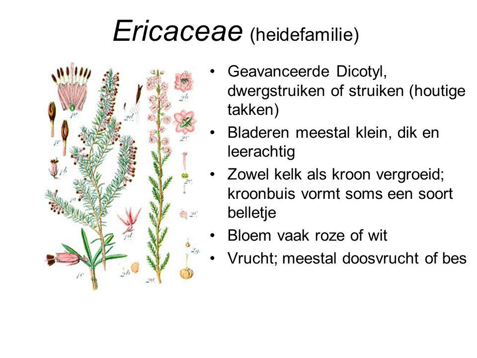 Ericaceae (heidefamilie)