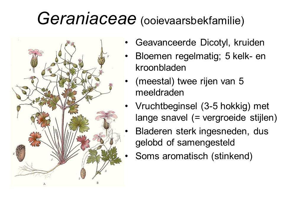 Geraniaceae (ooievaarsbekfamilie)