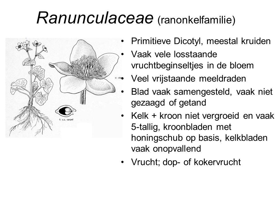 Ranunculaceae (ranonkelfamilie)
