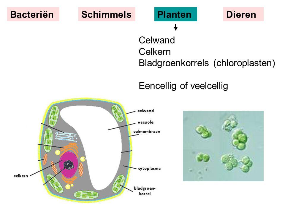 Bacteriën Schimmels. Planten. Dieren.