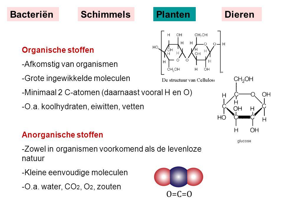 Bacteriën Schimmels Planten Dieren Organische stoffen